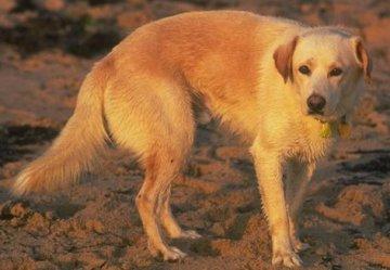 scared doge nervous apprehensive obssessed compulsive skittsh